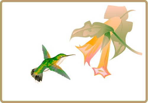 Hummingbird feeding from a flower; Bird, Wing, Flight, Animal