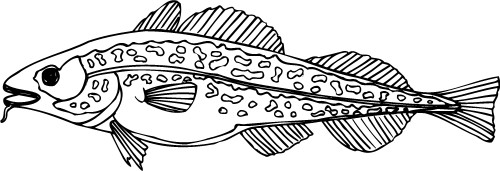 Fish; Outline, Water