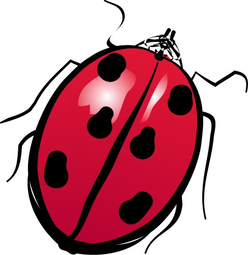 Ladybird; Insect, Flying, Wings, Antennae, Red, Black, Spots