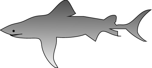 Shark; Carnivore, Water, Fish